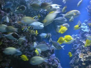 G 39 s spot maui part 1 for Fish bowl maui